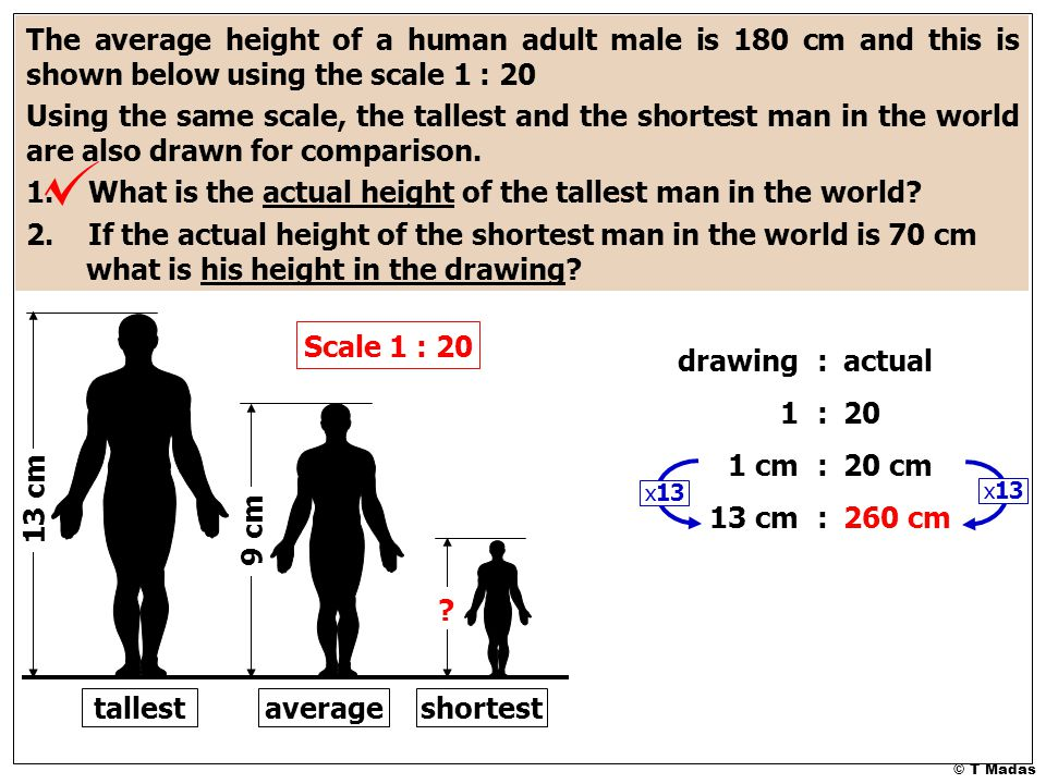 9 cm 13 cm ? The average height of a human adult male is 180 cm and this is shown below using the scale 1 : 20 Using the same scale, the tallest and t