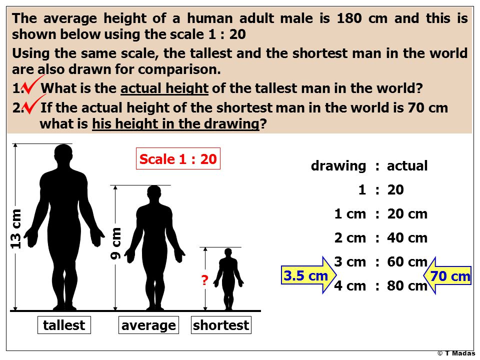 © T Madas 9 cm 13 cm ? The average height of a human adult male is 180 cm and this is shown below using the scale 1 : 20 Using the same scale, the tal