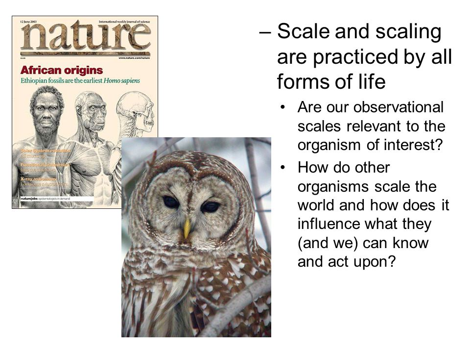 –Scale and scaling are practiced by all forms of life Are our observational scales relevant to the organism of interest? How do other organisms scale