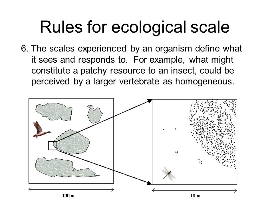 Rules for ecological scale 6. The scales experienced by an organism define what it sees and responds to. For example, what might constitute a patchy r