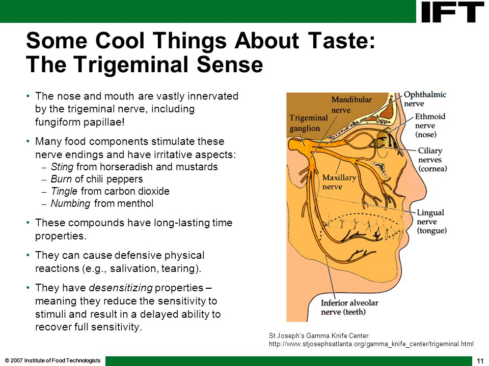 © 2007 Institute of Food Technologists 11 Some Cool Things About Taste: The Trigeminal Sense The nose and mouth are vastly innervated by the trigemina