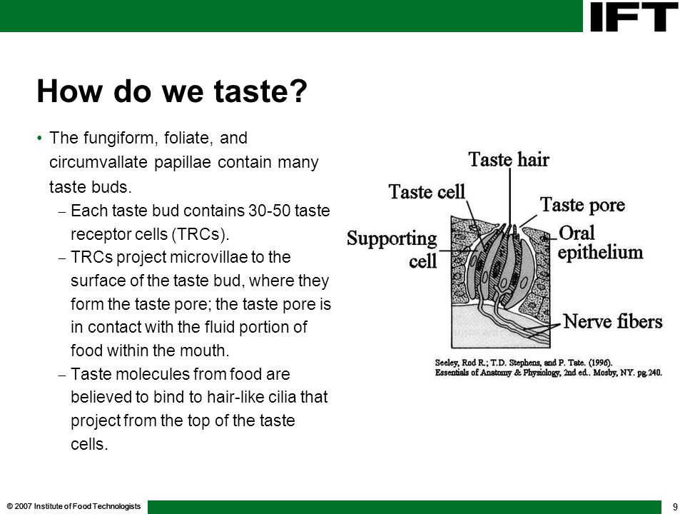 © 2007 Institute of Food Technologists 10 How do we taste After the tastants bind to the cell, the next step, taste transduction is somewhat different for each of the basic tastes.