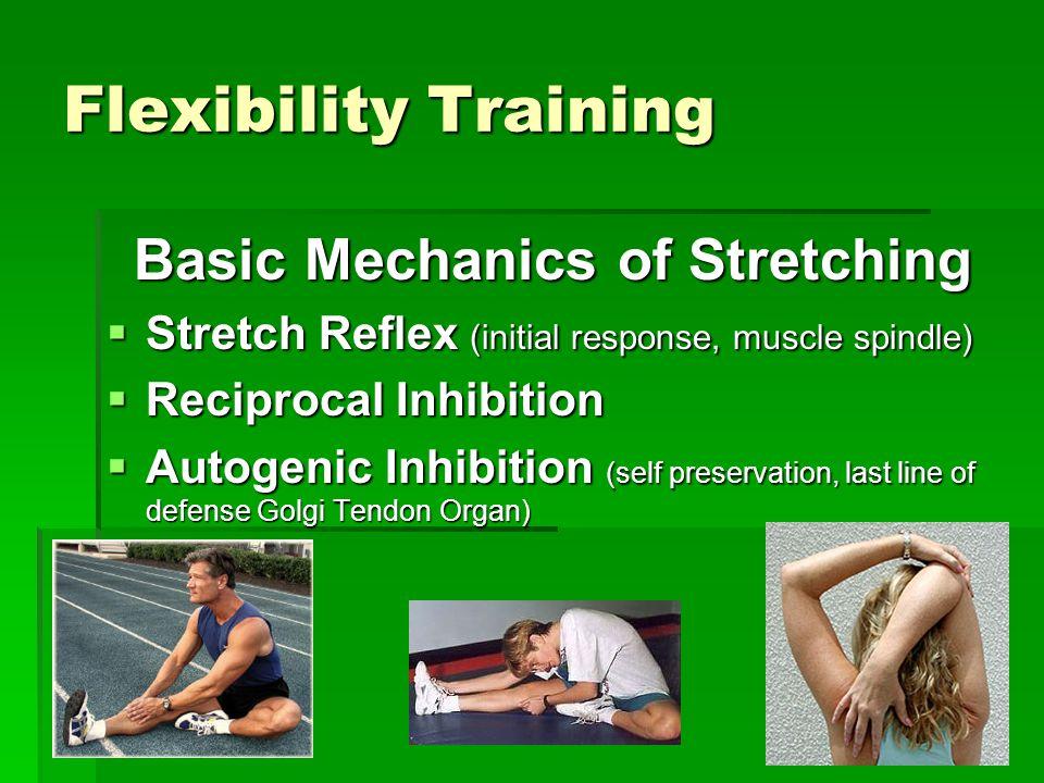 Flexibility Training Basic Mechanics of Stretching  Stretch Reflex (initial response, muscle spindle)  Reciprocal Inhibition  Autogenic Inhibition (self preservation, last line of defense Golgi Tendon Organ)