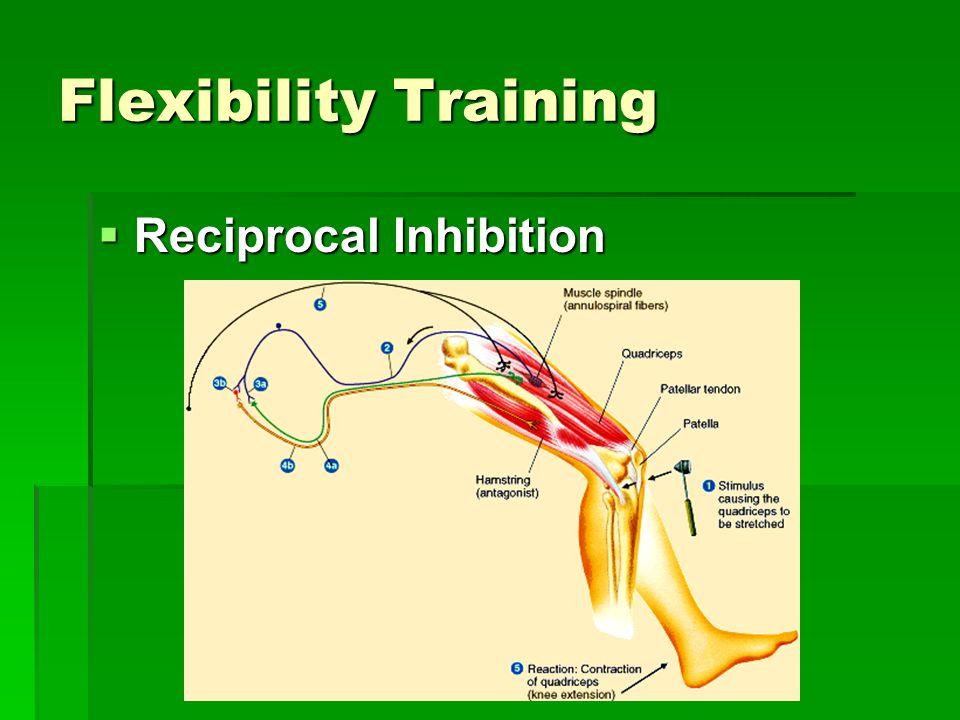 Flexibility Training  Reciprocal Inhibition