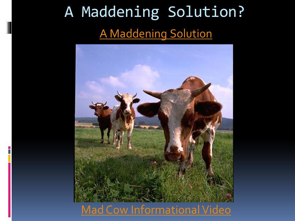 A Maddening Solution? A Maddening Solution Mad Cow Informational Video