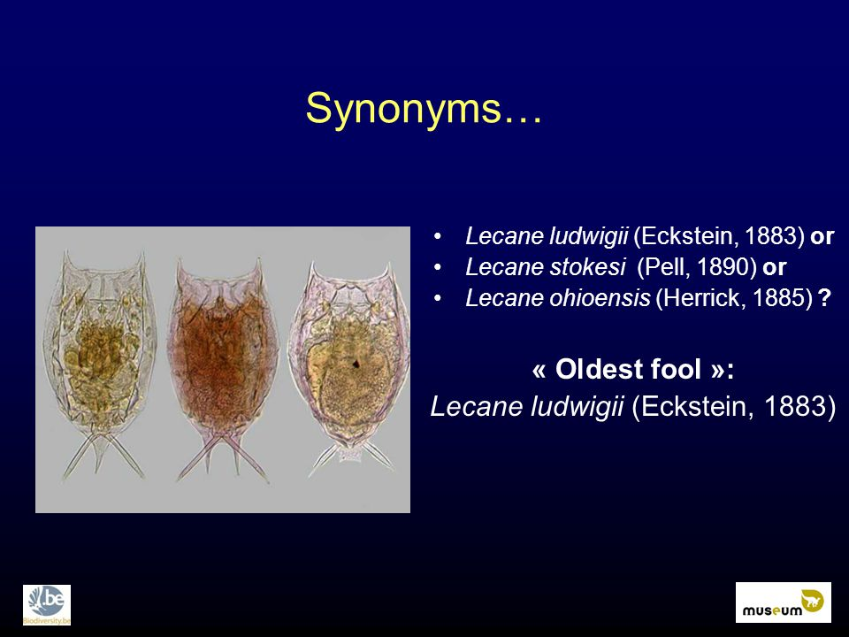 Synonyms… « Oldest fool »: Lecane ludwigii (Eckstein, 1883) Lecane ludwigii (Eckstein, 1883) or Lecane stokesi (Pell, 1890) or Lecane ohioensis (Herrick, 1885)