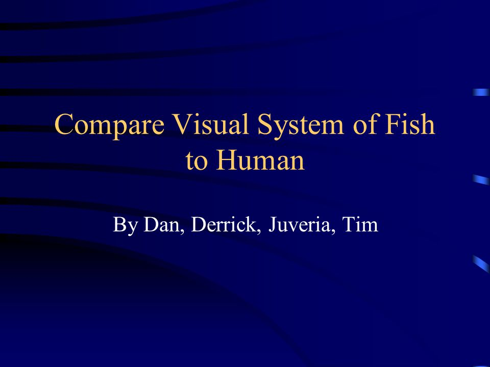 Compare Visual System of Fish to Human By Dan, Derrick, Juveria, Tim