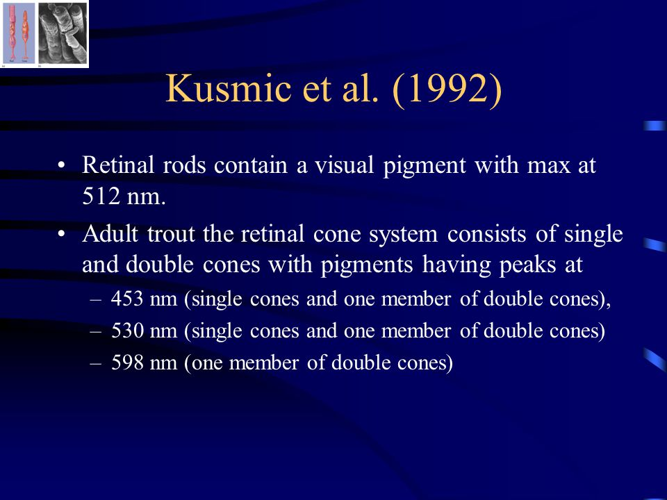 Kusmic et al. (1992) Retinal rods contain a visual pigment with max at 512 nm. Adult trout the retinal cone system consists of single and double cones