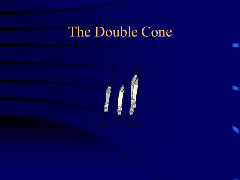 The Double Cone