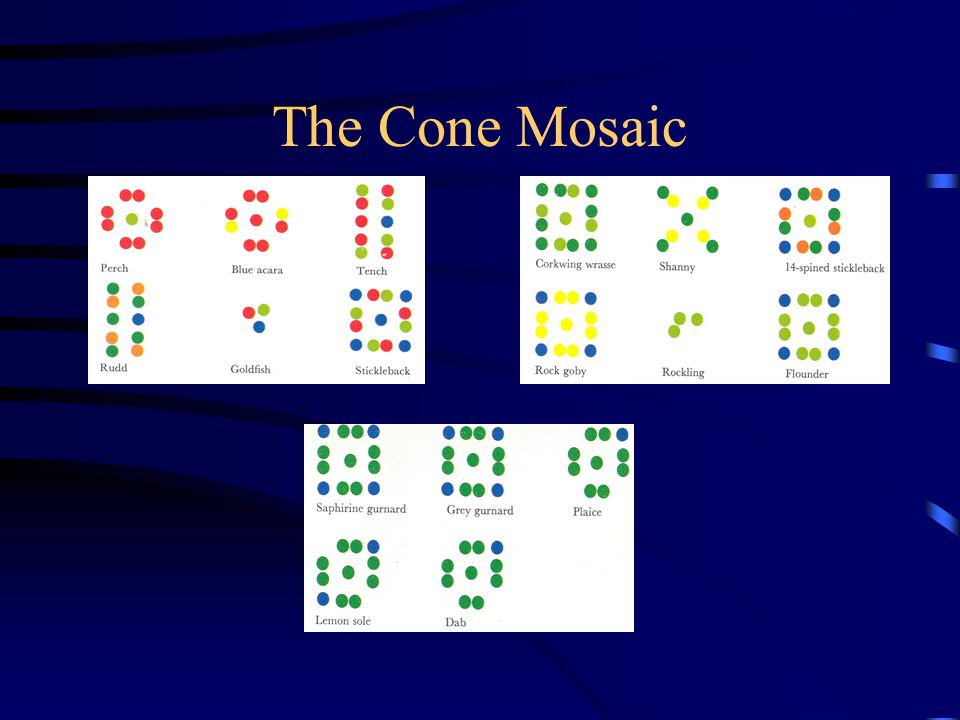 The Cone Mosaic