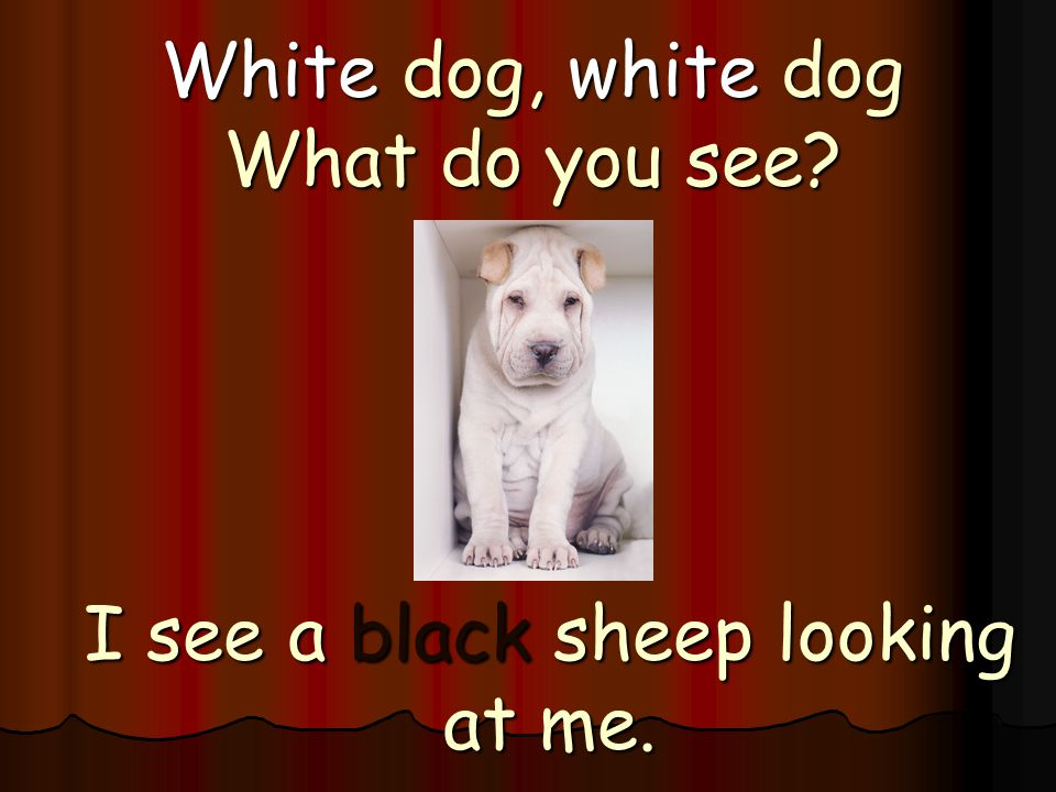 White dog, white dog What do you see? I see a black sheep looking at me.