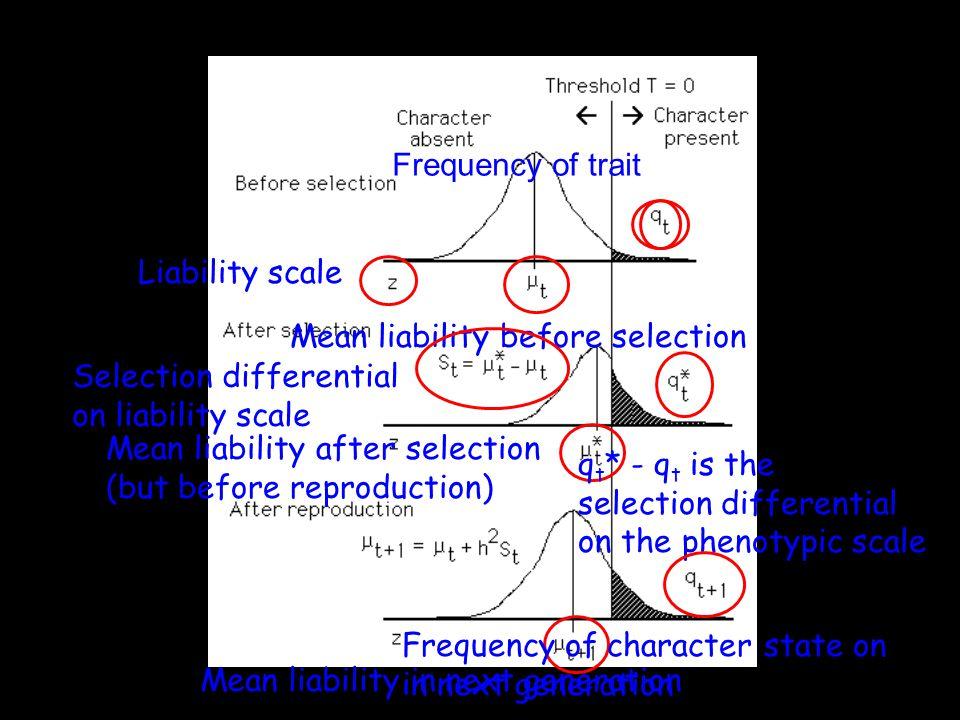 Liability scale Mean liability before selection Mean liability after selection (but before reproduction) Selection differential on liability scale q t