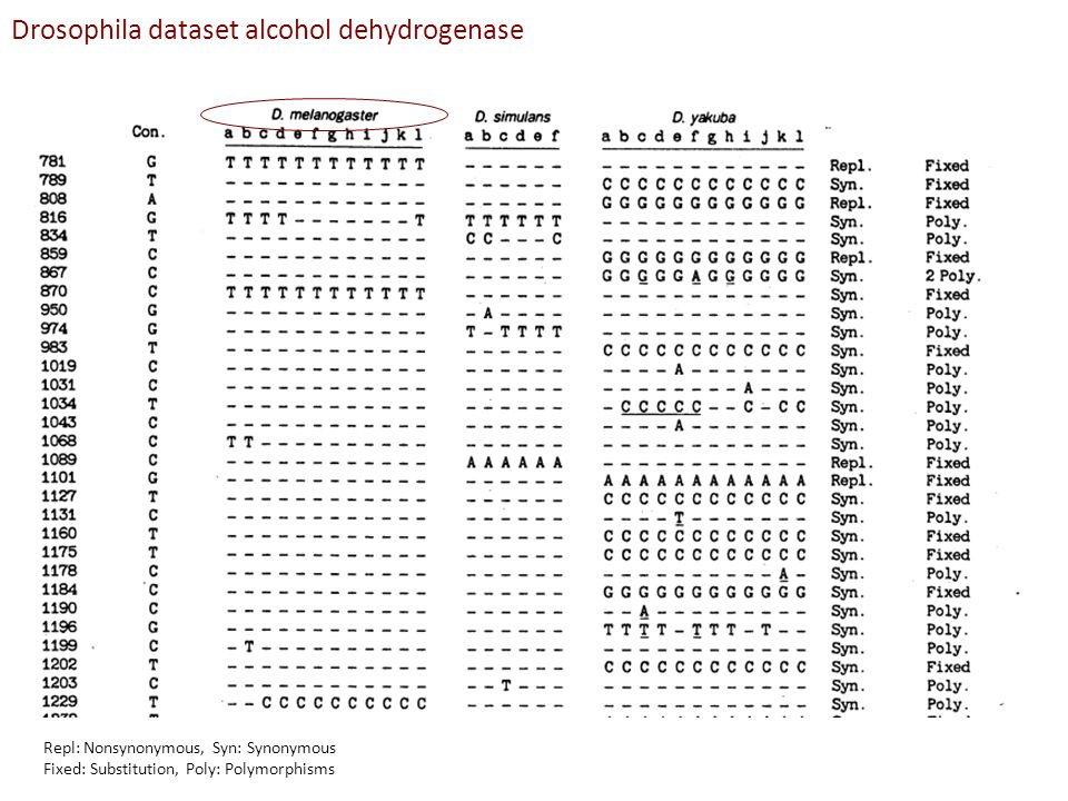Repl: Nonsynonymous, Syn: Synonymous Fixed: Substitution, Poly: Polymorphisms Drosophila dataset alcohol dehydrogenase