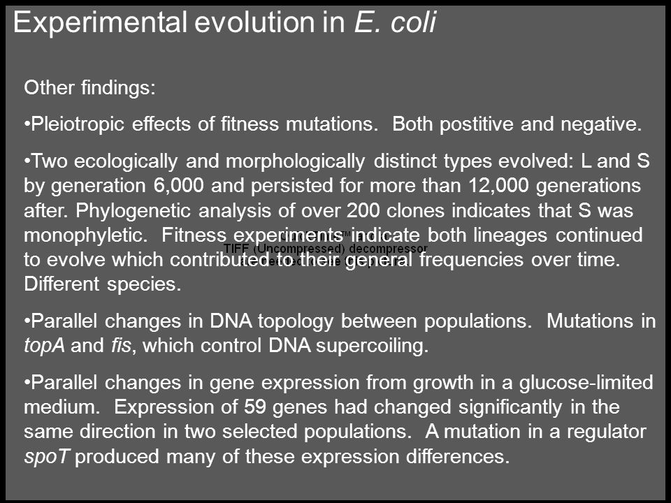 Experimental evolution in E. coli Other findings: Pleiotropic effects of fitness mutations.