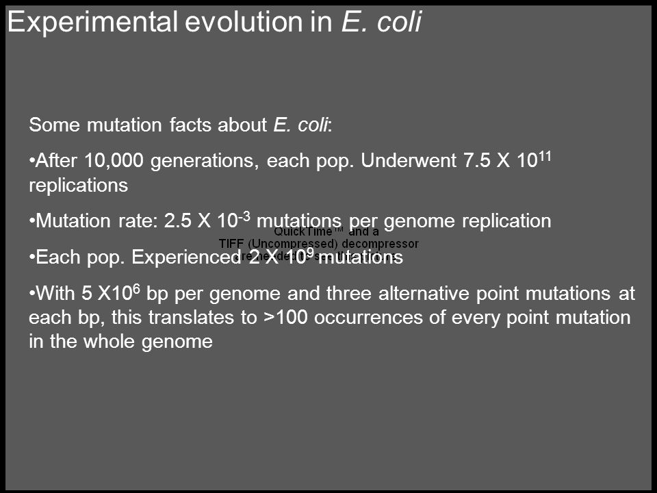 Experimental evolution in E. coli Some mutation facts about E.