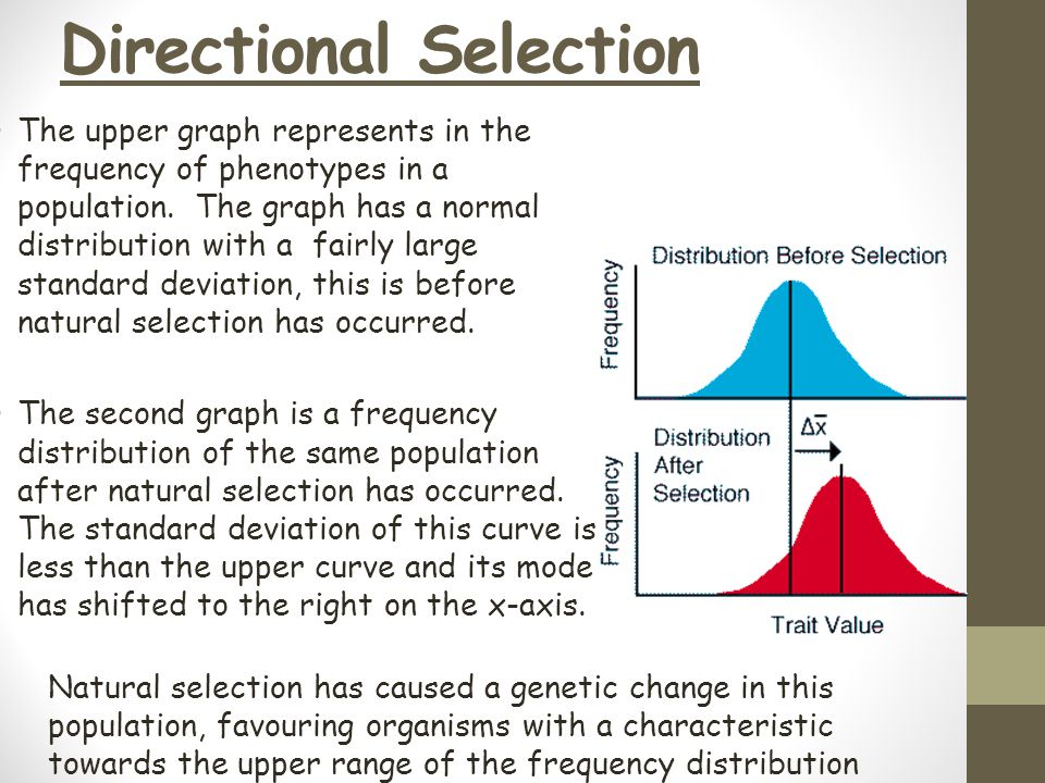 Directional Selection The upper graph represents in the frequency of phenotypes in a population. The graph has a normal distribution with a fairly lar
