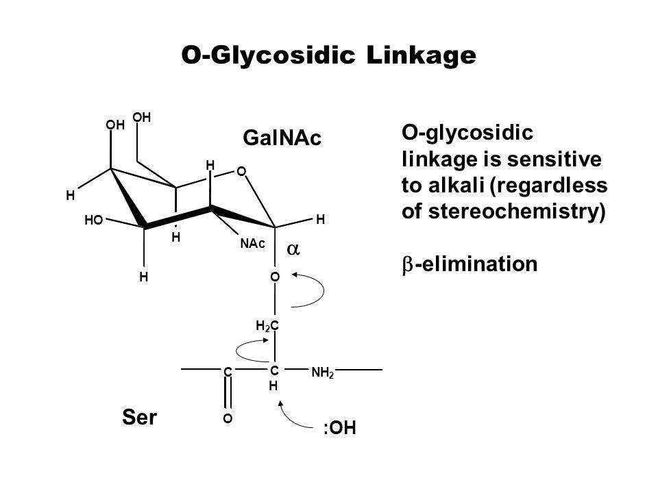 O-Glycosidic Linkage  O-glycosidic linkage is sensitive to alkali (regardless of stereochemistry)  -elimination O OH H H HO H O NAc H H OH NH 2 C H C H 2 C O Ser GalNAc :OH