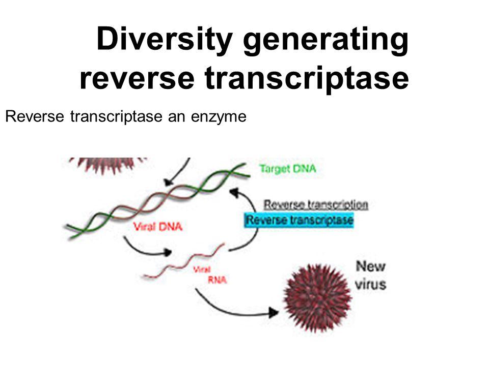 Diversity generating reverse transcriptase Reverse transcriptase an enzyme