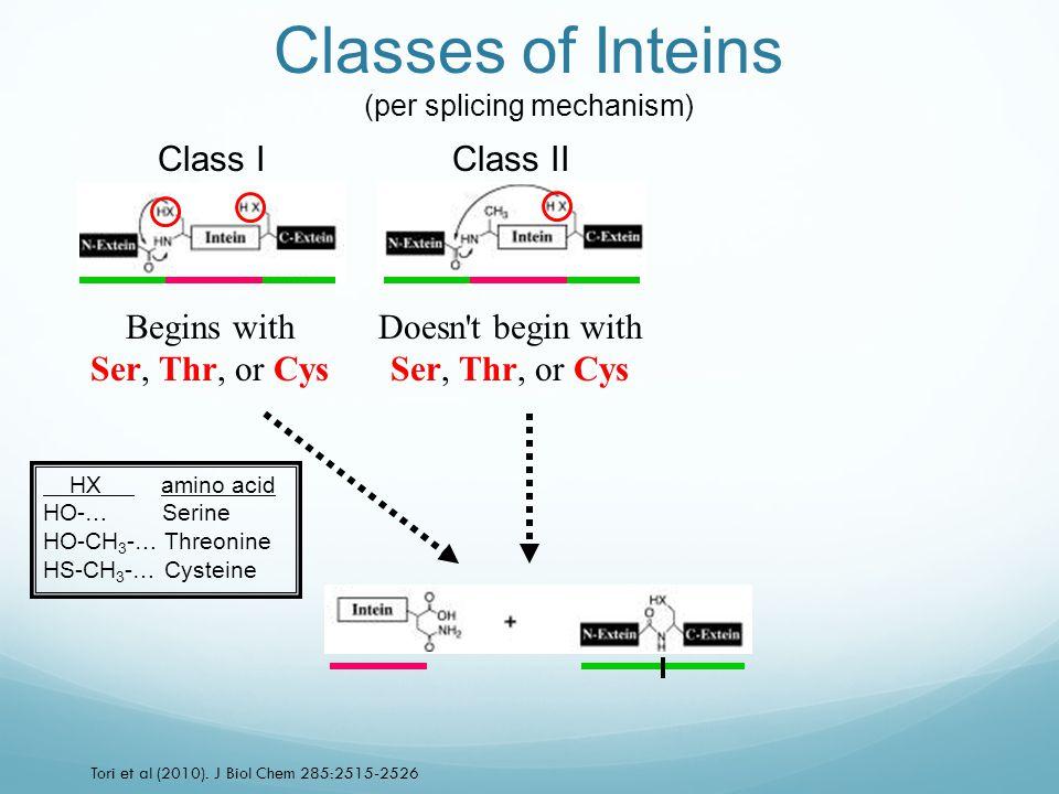 Class IClass II Tori et al (2010). J Biol Chem 285:2515-2526 Classes of Inteins (per splicing mechanism) Begins with Ser, Thr, or Cys Doesn't begin wi