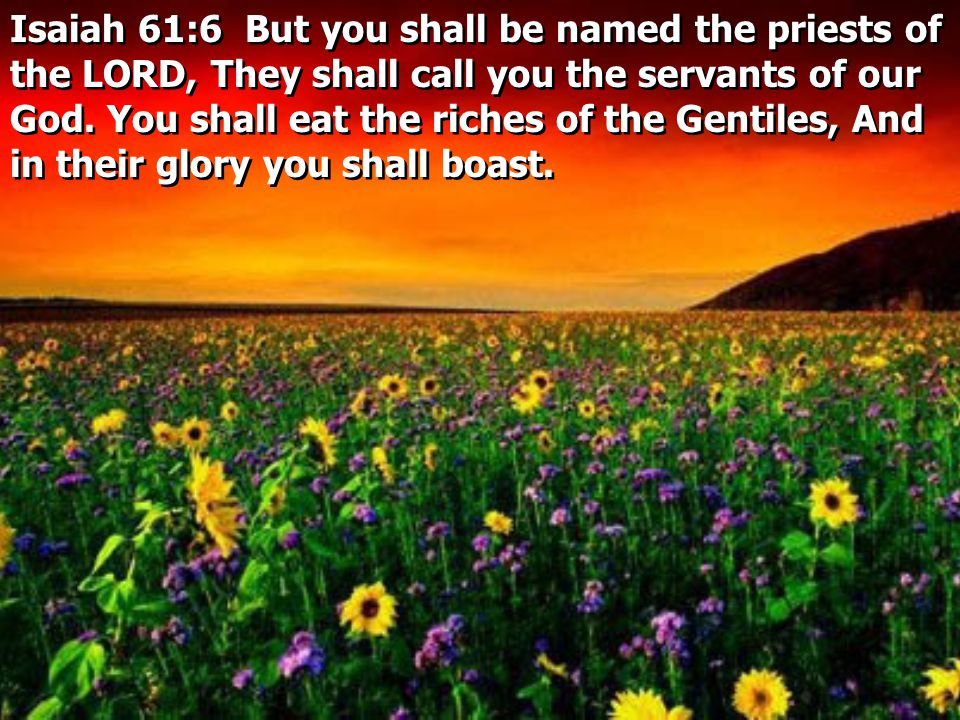 Isaiah 61:6 But you shall be named the priests of the LORD, They shall call you the servants of our God.