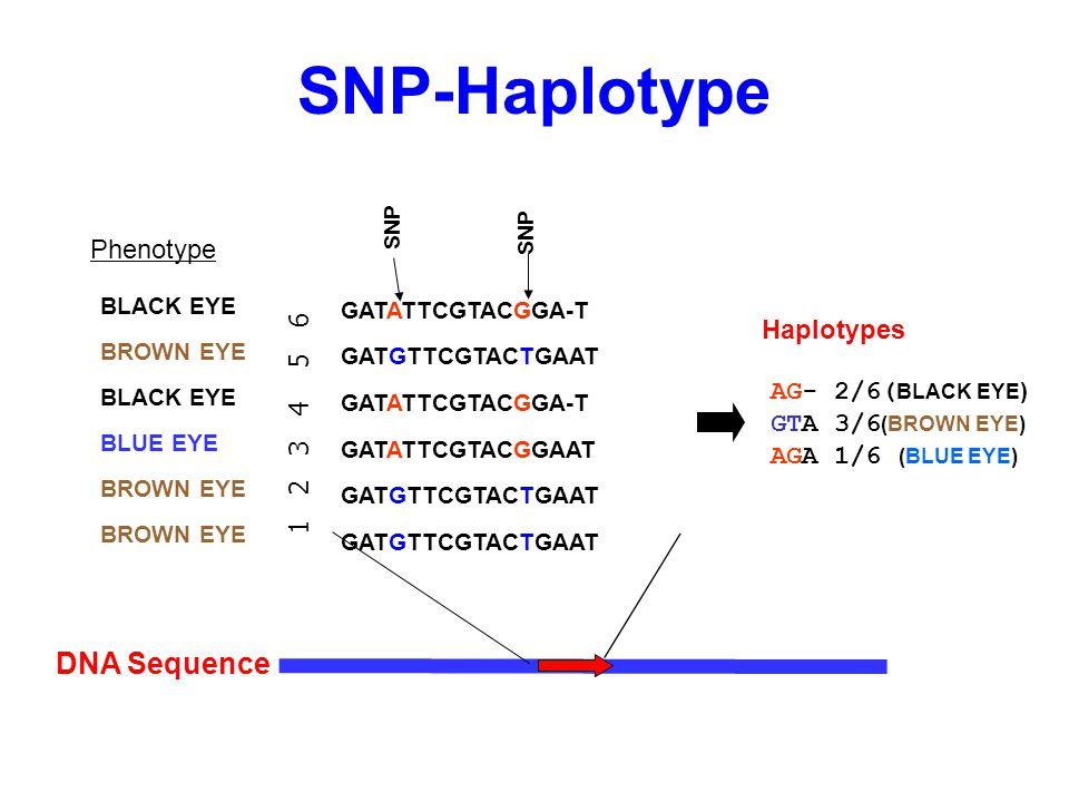SNP-Haplotype DNA Sequence GATATTCGTACGGA-T GATGTTCGTACTGAAT GATATTCGTACGGA-T GATATTCGTACGGAAT GATGTTCGTACTGAAT SNP 1 2 3 4 5 6 AG- 2/6( BLACK EYE ) G