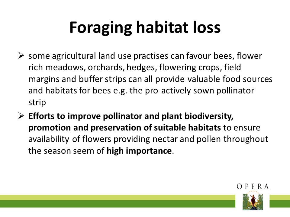 Foraging habitat loss  some agricultural land use practises can favour bees, flower rich meadows, orchards, hedges, flowering crops, field margins an