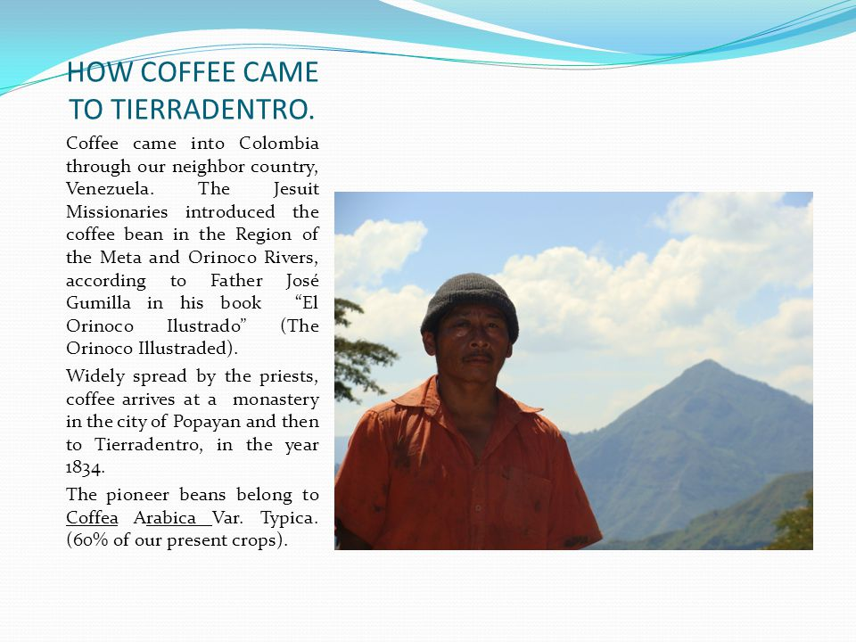 HOW COFFEE CAME TO TIERRADENTRO. Coffee came into Colombia through our neighbor country, Venezuela.