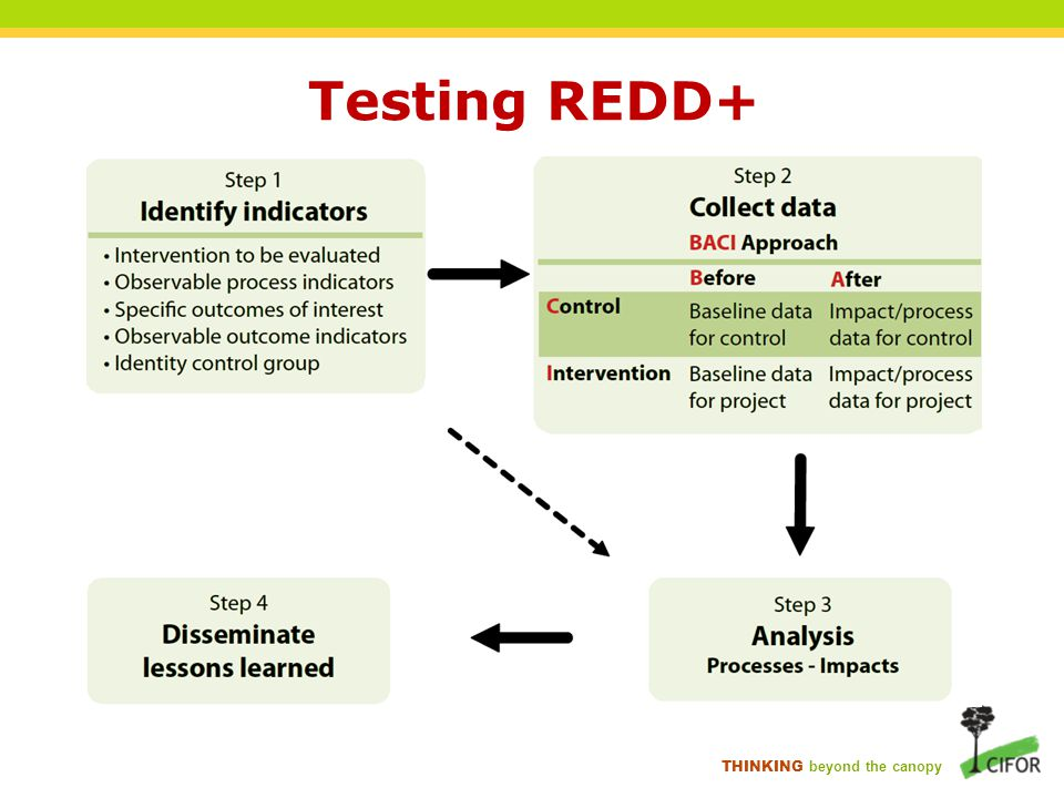 THINKING beyond the canopy Testing REDD+