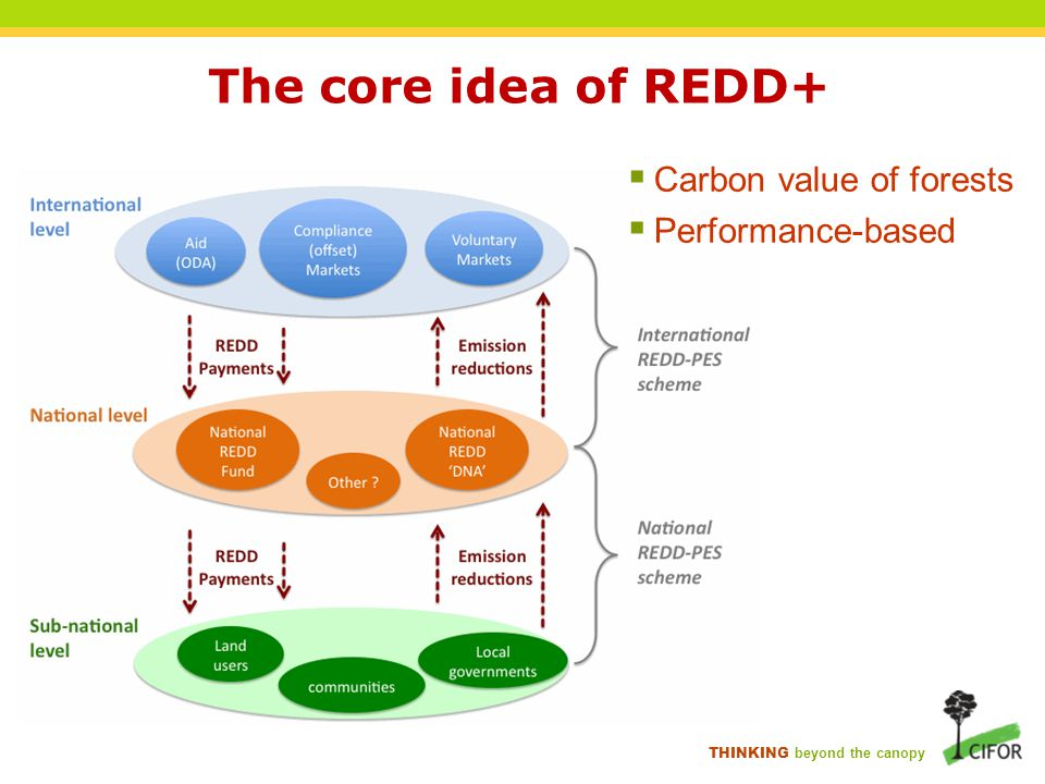 THINKING beyond the canopy The core idea of REDD+  Carbon value of forests  Performance-based