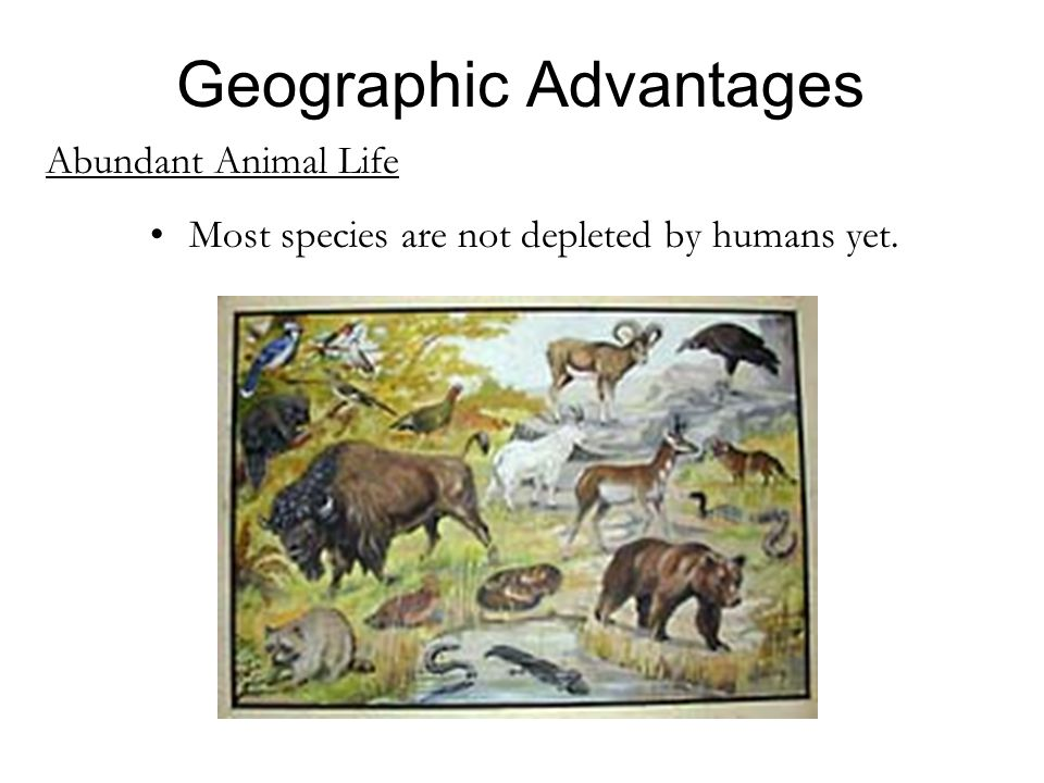 Abundant Animal Life Most species are not depleted by humans yet. Geographic Advantages