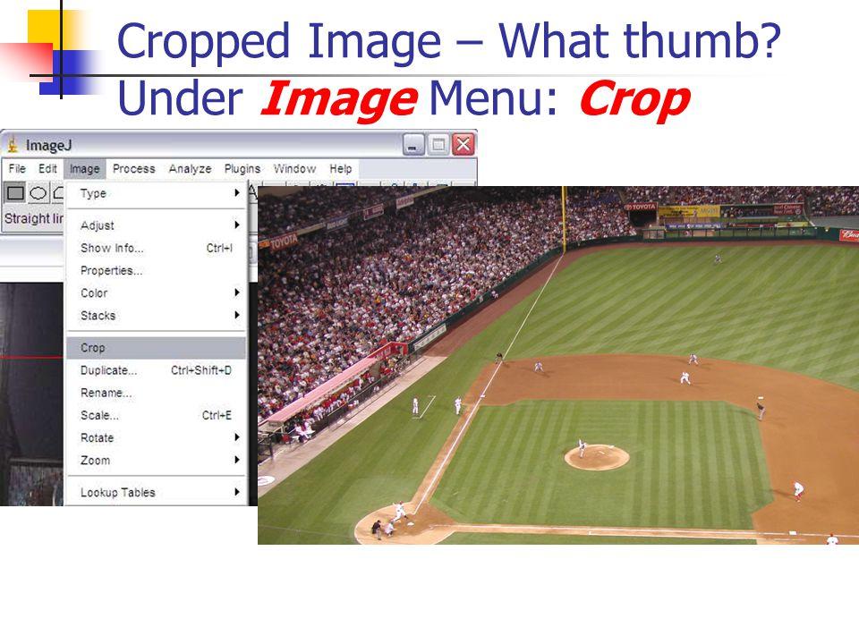 Cropped Image – What thumb Under Image Menu: Crop