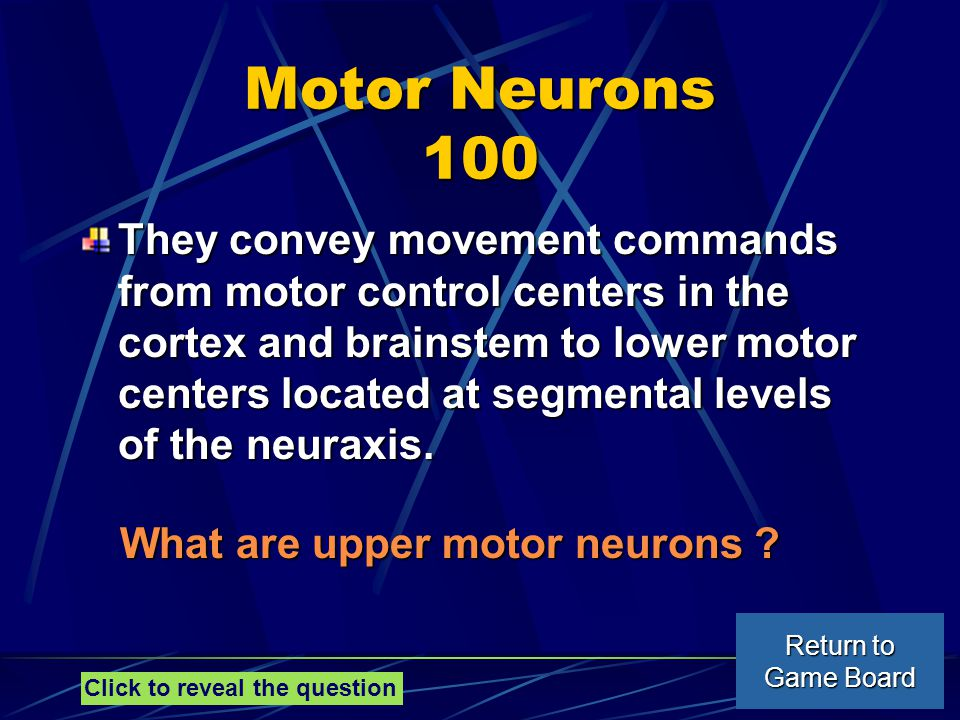 Motor Neurons 100 They convey movement commands from motor control centers in the cortex and brainstem to lower motor centers located at segmental levels of the neuraxis.