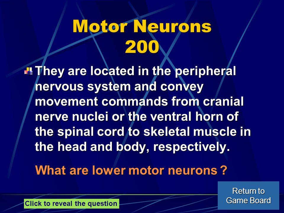 Motor Neurons 200 They are located in the peripheral nervous system and convey movement commands from cranial nerve nuclei or the ventral horn of the spinal cord to skeletal muscle in the head and body, respectively.