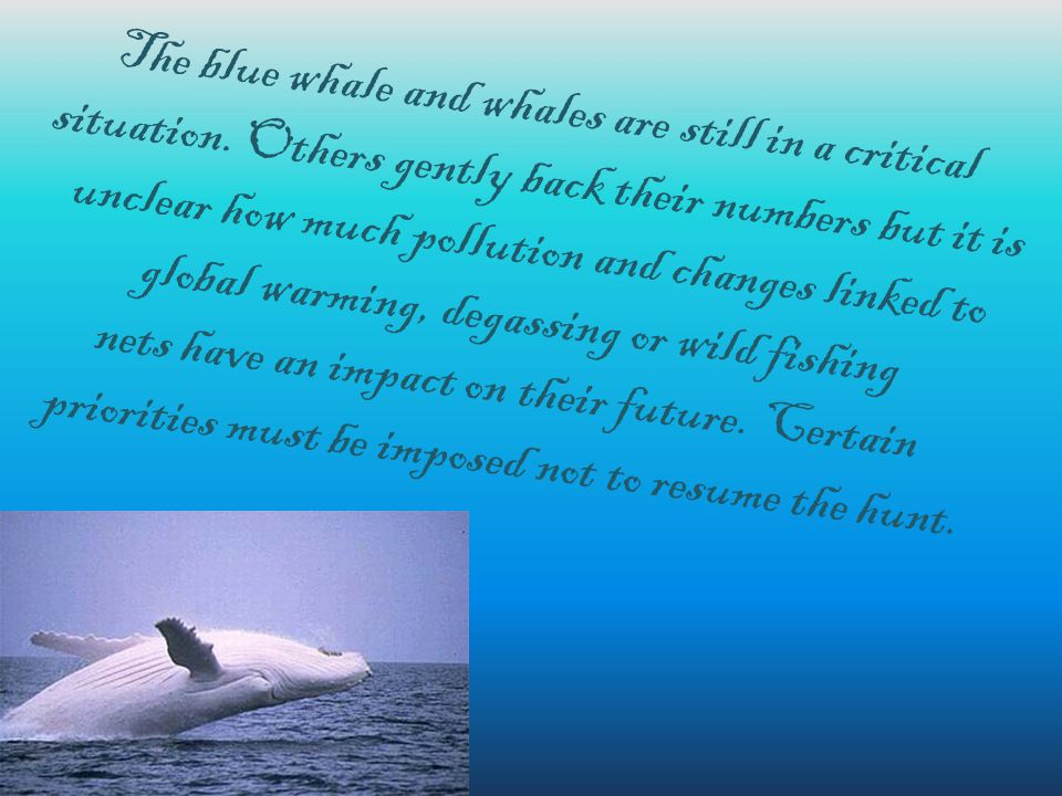 The blue whale and whales are still in a critical situation.