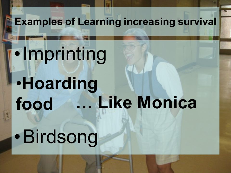 Examples of Learning increasing survival Imprinting Birdsong Hoarding food … Like Monica