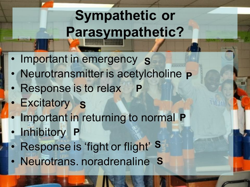 Sympathetic or Parasympathetic.