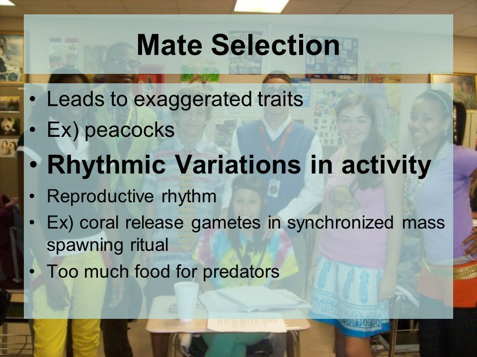 Mate Selection Leads to exaggerated traits Ex) peacocks Rhythmic Variations in activity Reproductive rhythm Ex) coral release gametes in synchronized mass spawning ritual Too much food for predators