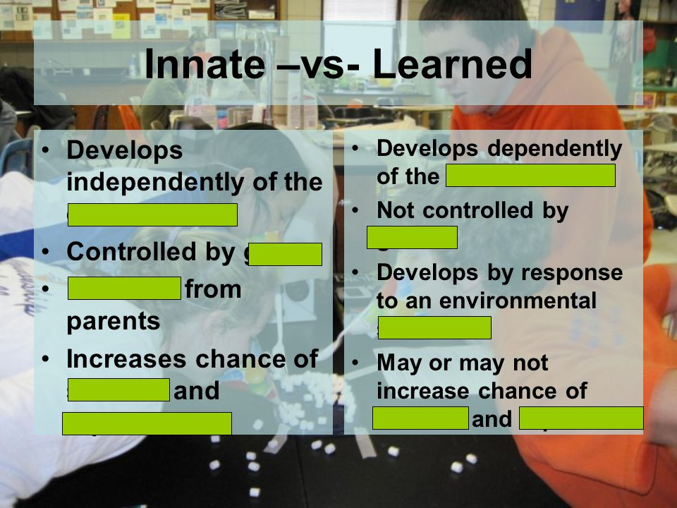 Innate –vs- Learned Develops independently of the environment Controlled by genes Inherited from parents Increases chance of survival and reproduction Develops dependently of the environment Not controlled by genes Develops by response to an environmental stimulus May or may not increase chance of survival and rep.