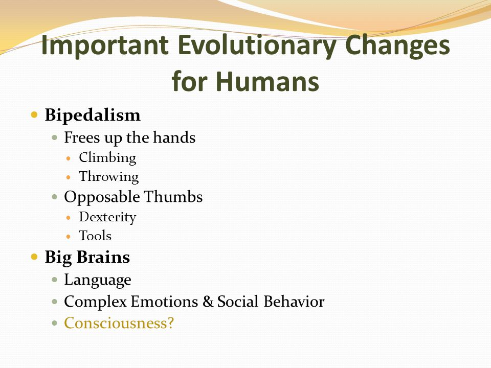 Important Evolutionary Changes for Humans Bipedalism Frees up the hands Climbing Throwing Opposable Thumbs Dexterity Tools Big Brains Language Complex Emotions & Social Behavior Consciousness