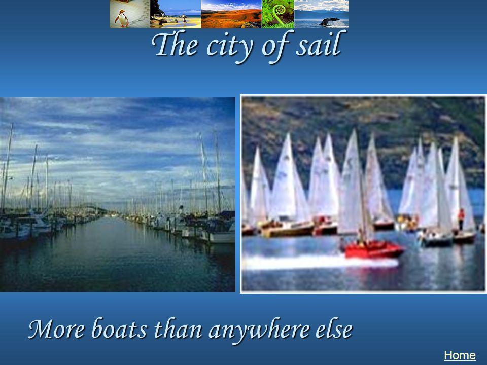 The city of sail Home More boats than anywhere else