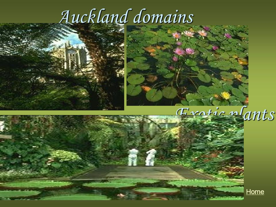 Auckland domains Home Exotic plants