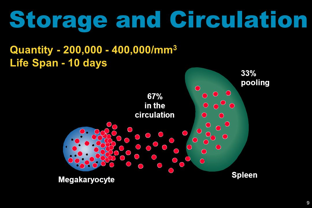9 Storage and Circulation Quantity - 200,000 - 400,000/mm 3 Life Span - 10 days 33% pooling 67% in the circulation Megakaryocyte Spleen