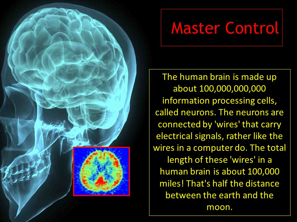 Master Control The human brain is made up about 100,000,000,000 information processing cells, called neurons. The neurons are connected by 'wires' tha
