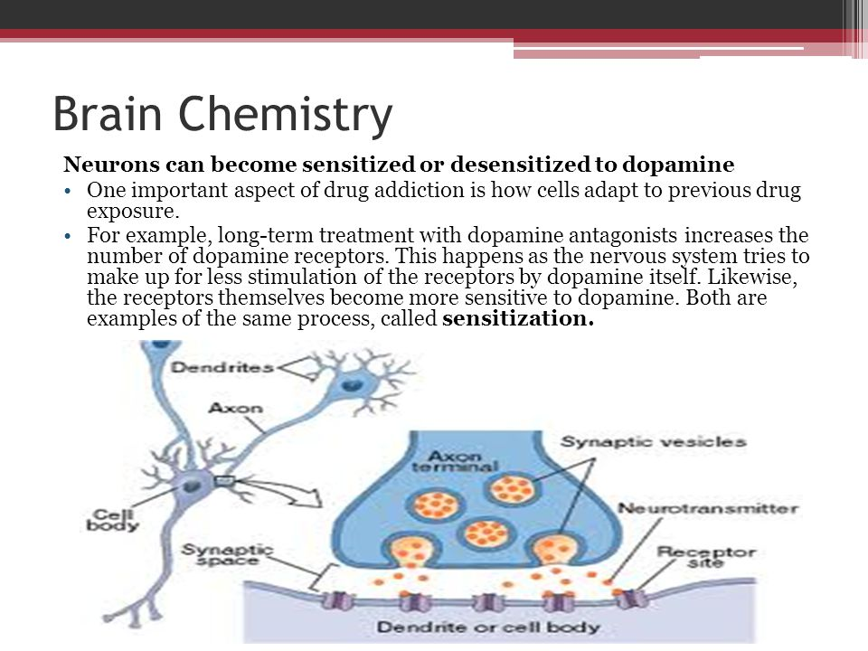 Brain Chemistry Neurons can become sensitized or desensitized to dopamine One important aspect of drug addiction is how cells adapt to previous drug e