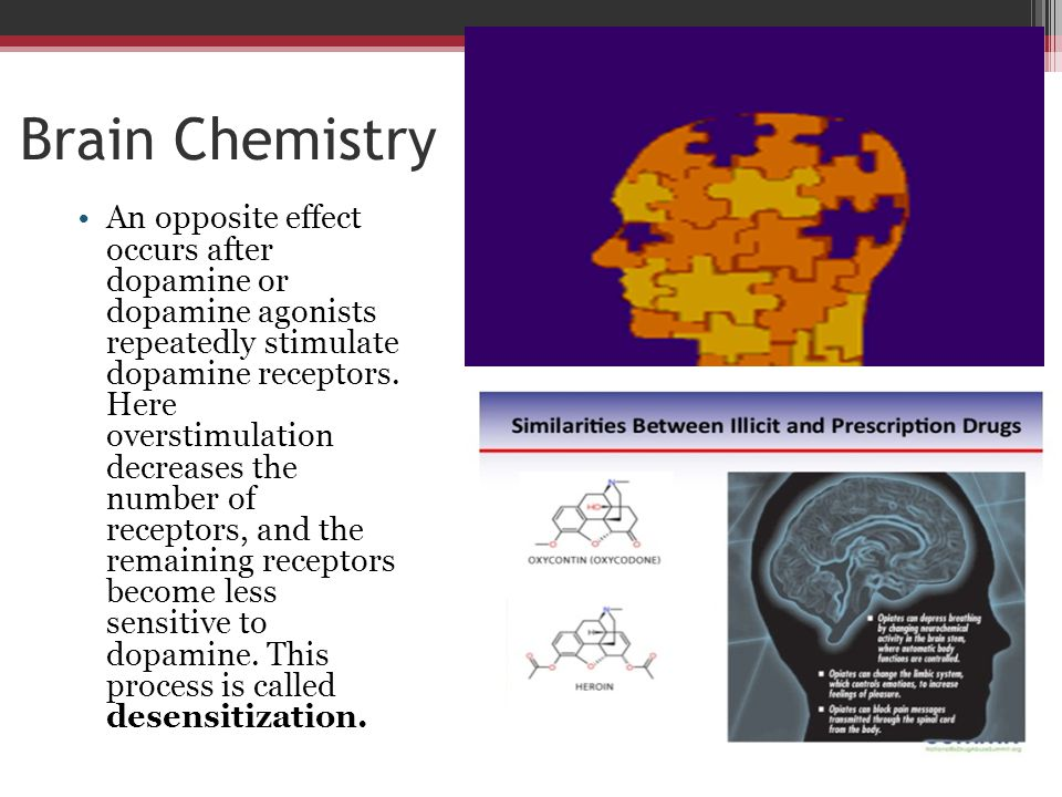 Brain Chemistry An opposite effect occurs after dopamine or dopamine agonists repeatedly stimulate dopamine receptors. Here overstimulation decreases