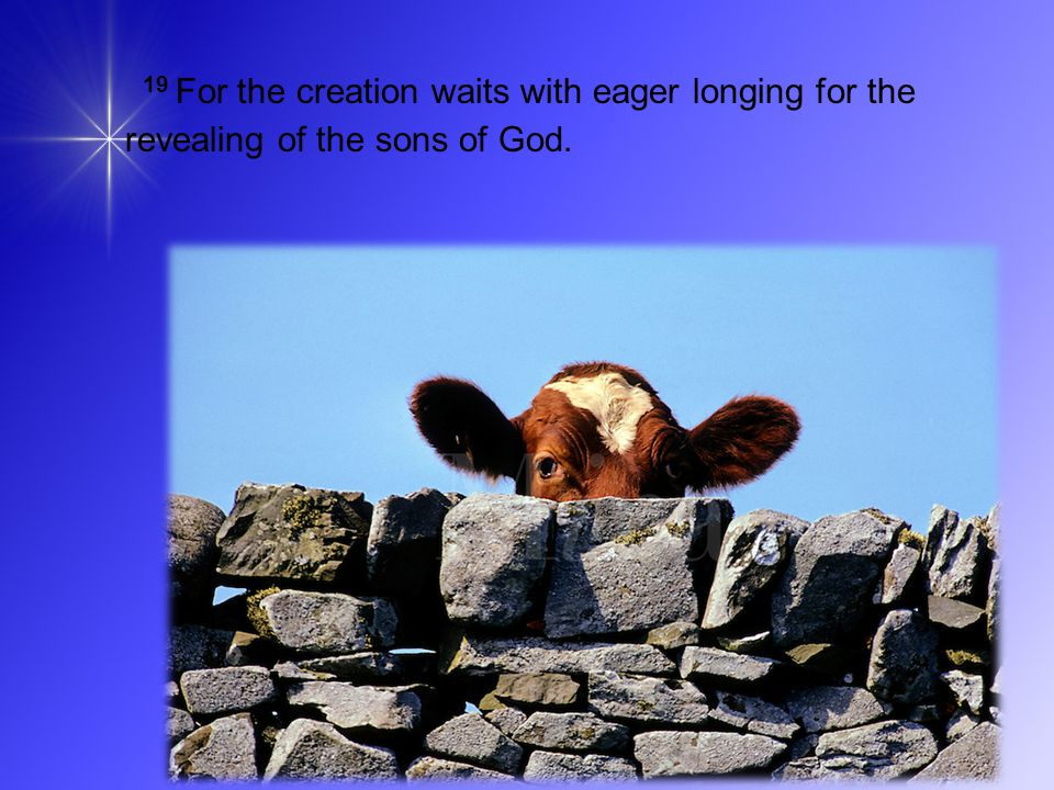 19 For the creation waits with eager longing for the revealing of the sons of God.