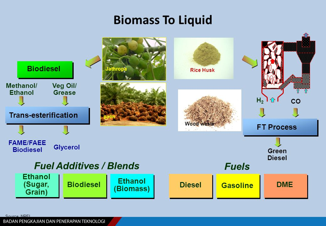 Biomass To Liquid Source: NREL Methanol/ Ethanol Green Diesel H2H2 FT Process palm Jathropa Fuel Additives / Blends Fuels DME Gasoline Diesel Ethanol