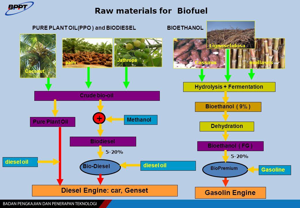 Plant Part of Plant Ethanol Productivity(L/ha/yr) CassavaRoot4,500 Sweet potatoRoot7,800 Sugar CaneStalk5,000 – 6,000 CornGrain5,000 -6,000 SorghumGrain3,000 -4,000 Sweet sorghumStalk5,500 – 6,000 SagoStalk4,000 – 5,000 Palm Sugar/ArenSap10,000-20,000 Nipah (Mangrove)Sap 5,000 -15,000 LontarSap8,000 – 10,000 CoconutSap8,000 – 10,000 Resource Base of Bioethanol