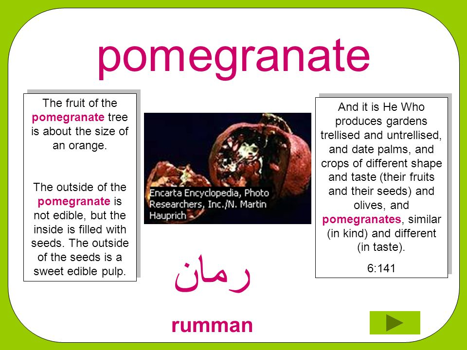 pomegranate ﺮﻣﺎﻦ rumman And it is He Who produces gardens trellised and untrellised, and date palms, and crops of different shape and taste (their fruits and their seeds) and olives, and pomegranates, similar (in kind) and different (in taste).