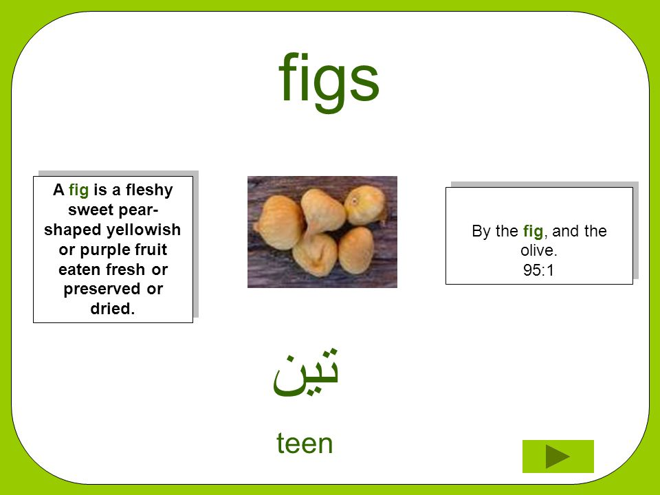 figs ﺗﻳﻦ teen By the fig, and the olive. 95:1 A fig is a fleshy sweet pear- shaped yellowish or purple fruit eaten fresh or preserved or dried.